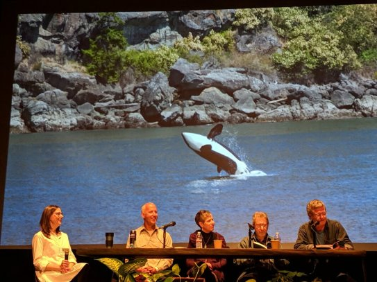 for-love-of-orcas-panel-at-oilf-photo-by-alina-rios_orig
